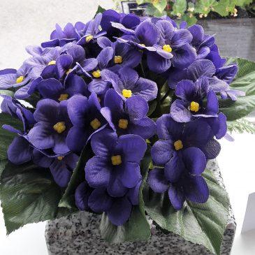 Coupe de violette CP47